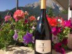 Südtiroler Wein genießen