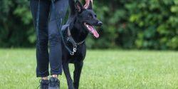 Hundeausbildung: Schimmelspürhunde spüren schädliche Pilze auf