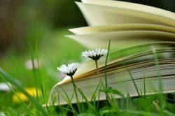 Onlinekurse: Gelassen und entspannt durch den Alltag