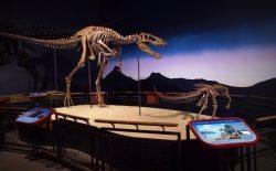 Dinosaurierforschung für die ganze Familie: PaleoFest Rockford findet zum 20. Mal statt