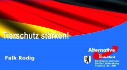 Berlin – Falk Rodig: AfD rettet Europas größtes Tierheim
