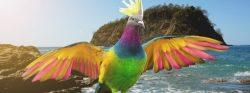 """AIFS vergibt Stipendium Paradiesvogel"""" für ein Trimester in Costa Rica"""