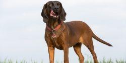 Top 10: Das sind die 10 beliebtesten Hundenamen