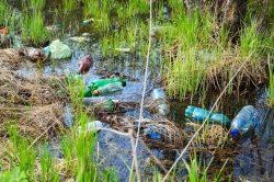 SodaStream zur Entdeckung des PETase-Enzyms: Industrie und Verbraucher sollten weiter…