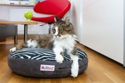 Warum Katzen Katzenkissen lieben