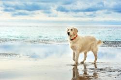 Urlaub mit Hund Ferienhäuser Strandhäuser und Reethäuser am Meer eingezäunt,…