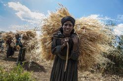 15. Oktober: Internationaler Tag der Frauen in ländlichen Gebieten