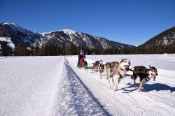 Viertausend Pfoten im Schnee