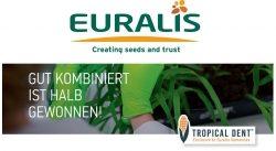 EURALIS Erfolgsgeschichte Tropical Dent®
