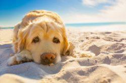 Urlaub mit Hund Ostsee Insel Rügen Strandhäuser Sauna Kamin Whirlpool…