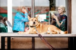 DoggyBed – Hundebetten der Extraklasse, made in Germany