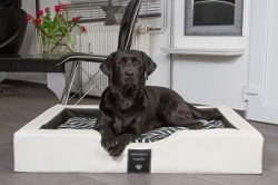DoggyBed – der optimale Hundeschlafplatz, made in Germany