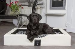DoggyBed – der optimale Hundeschlafplatz, made in Germany