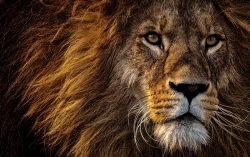 Africa-Domains – die Webadresse für Afrika-Reisen