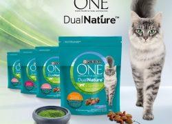 Gesundheit von innen – unterstützt die Abwehrkräfte Ihrer Katze