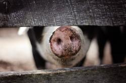 Hofheimer Sinngespräch am 15.03.2019: Mensch Tier, was machen wir mit…