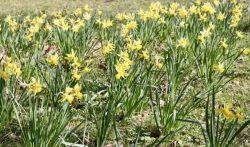 Garten in Stuttgart fit machen für den Frühling