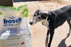 Fünf Lkw mit Futterspenden für ausrangierte Jagdhunde
