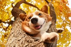 Hundevideos bei TierklinikenNet