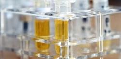 Rheumatologe in München: Studie zu Begleiterkrankungen