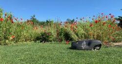 Blumenwiese mit dem Rasenroboter