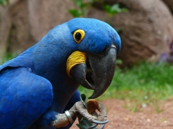 Anschaffung und Haltung von Vögeln
