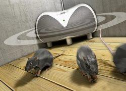 Die Maus muss raus aus dem Haus