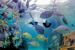 Florida: Discovery Cove mit Sonderaktion zu Black Friday
