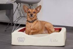 DoggyBed – Gesunde Hundebettchen 2020