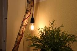 Birkenstamm wird zur Leuchte