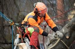Baumpflege kurz erklaert – von Albrecht Buehler