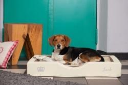 Exklusives Hundebett mit softem Kunstlederbezug