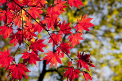 Ayurveda im Herbst