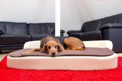 Gesunde Hundekissen mit Bezügen aus Kunstleder