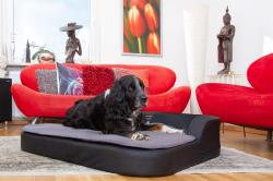 Große Hundekissen mit Kuschelfaktor