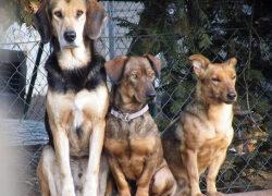 Tierherberge in Kamp-Lintfort wegen steigender Corona-Zahlen geschlossen