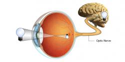 AgeFacts: Sehnerv und Glaukom