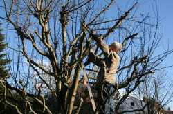 Gesunde Gartenarbeit – Verbraucherinformation der ERGO Group