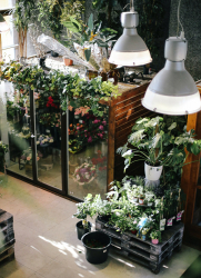 Schnelleres Wachstum mit Vollspektrum-Pflanzen-Lampen