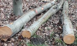 Steigende Kosten für Bauholz – Brennholz bleibt günstig